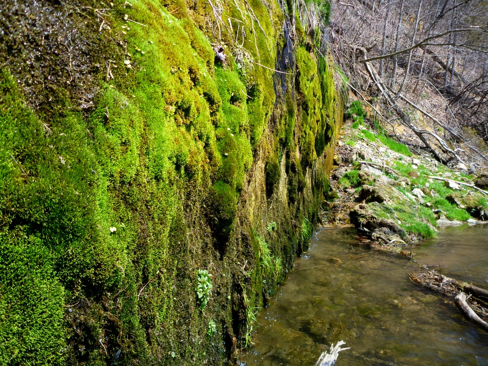 The Dripping Wall of Moss